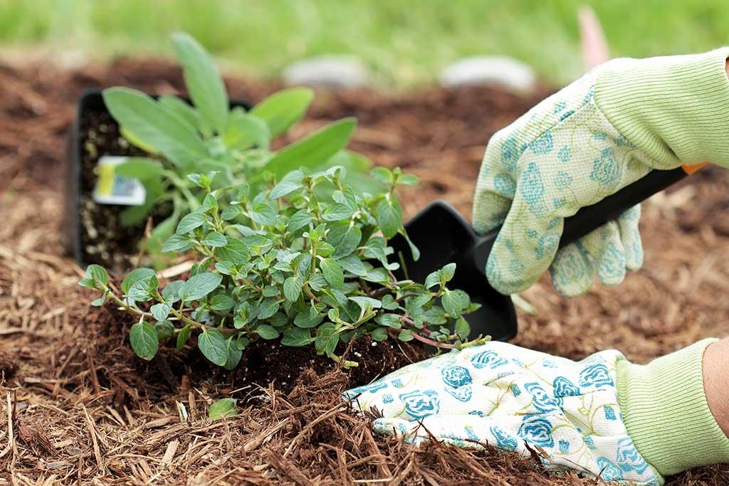 fertilizante-mulch