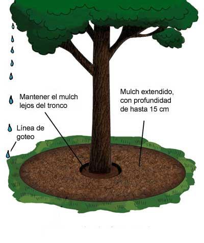correcto_mulch_arboles